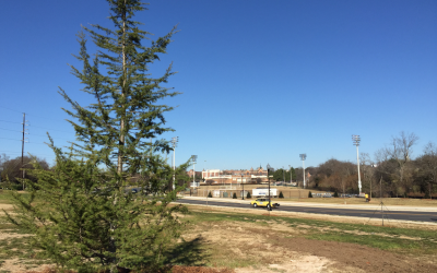 Macon-Bibb celebrates 1,000 trees on Arbor Day 2016
