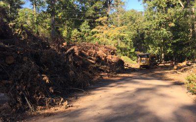 Solid Waste Director talks about debris cleanup